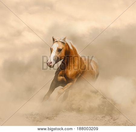Palomino horse in the dust prairies running