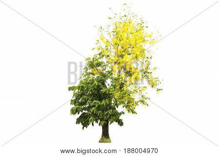 Beautiful tree on isolated white background .