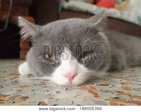 Cat lying on the surface of the folk
