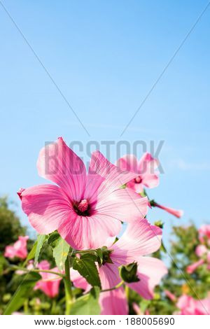 Pink flower on the sky background Floral