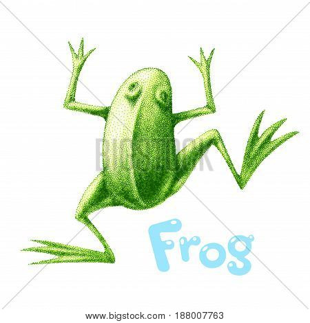 Green vector frog painted in engraving style. Eps8. RGB Global colors