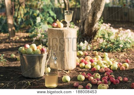 A bucket of apples and a bottle of apple juice in the garden during the sunset