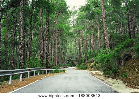 Beautiful Green Troodos Forest Road In Cyprus