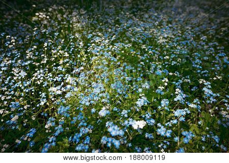 A Flower Clearing In A Dark Spring Forest.