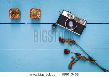 cactusdry rose and old camera on blue wooden table