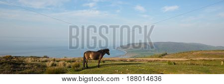 Exmoor national park with pony towards Porlock Somerset coast panoramic view