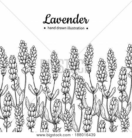 Lavender vector drawing border. Isolated  wild flower and leaves. Herbal engraved style illustration. Detailed botanical sketch for label, banner of organic cosmetic, medicine,  beauty store, perfume