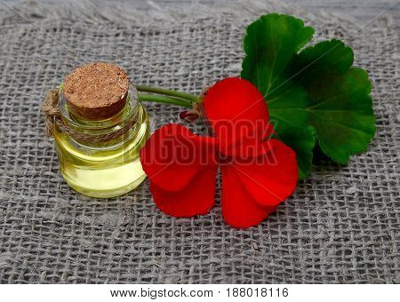 Geranium essential oil in a glass bottle with flower and leaf of the geranium plant on sacking background.Geranium oil for spa,aromatherapy and bodycare.Extract oil of geranium.