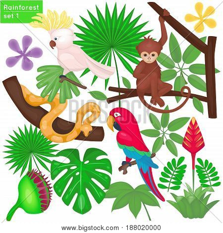 Rainforest and jungle life set. Tropical animals and plants. Vector illustration. Cartoon style