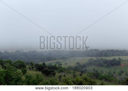 Mist Over The Bush Landscape Of The Addo Elephant  Park