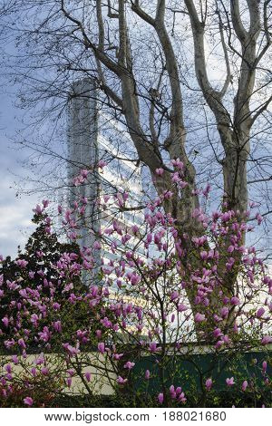 MILAN, ITALY - MARCH 26, 2017: Milan (Lombardy Italy): the skyscraper known as Allianz Building in the new CItylife area (Tre Torri) with blossoms