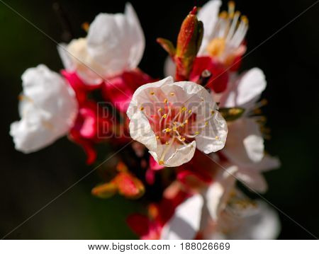 blossoming white flower in a spring sunny day