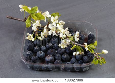 Blueberries white flowers and green leaf in a plastic box on gray background