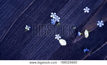 Flowers forget-me-nots on a beautiful wooden textured background with place for text.