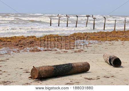 Logs on a beach with birds perched in the back over the water