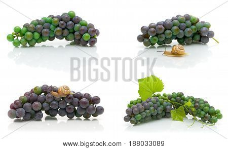 bunch of dark grapes on a white background. Horizontal photo.