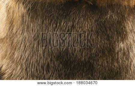 background close up of natural fur of a mink of brown color