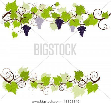 Grape vines frame.