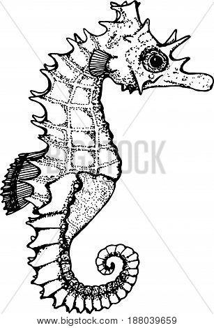 Black and white illustration of a sea animal. Figure seahorse.