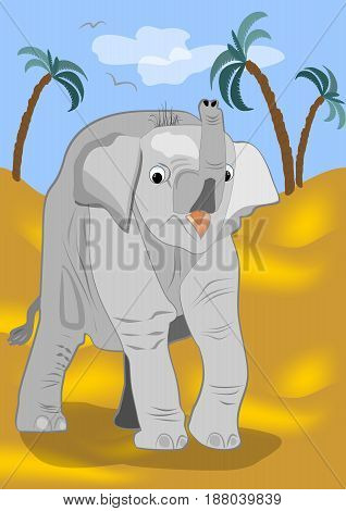 Small curious elephant is going to explore the desert