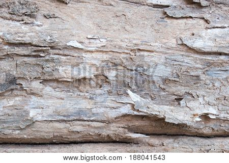 Close Up Old Bark Wood Tree Background. Wrinkle Wooden Texture Details.
