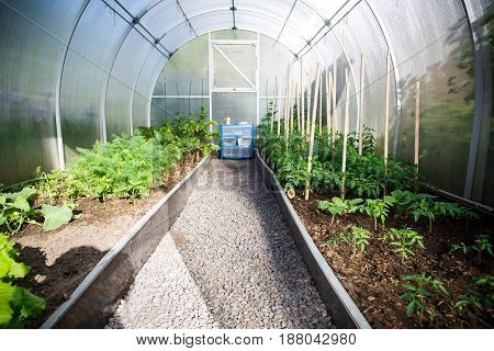Inside the greenhouse planted vegetables and greens in early spring