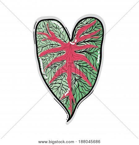leaf of natural plant herb botany, vector illustration