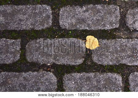 A single yellow leaf on the pavement. Symbolizes sadness loneliness and autumn.