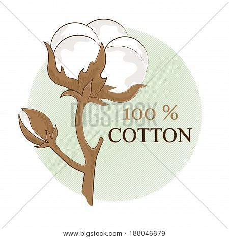Cotton branch. 100% eco. Cotton flower. Botanical art isolated on white background. Use for printing, poster, decoration and other design. Logo. Vector illustration.