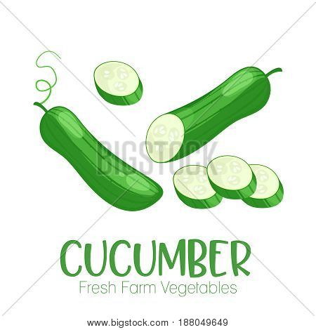 Vector cucumber isolated on white background.Vegetable illustration for farm market menu. Healthy food design poster. Cartoon style vector
