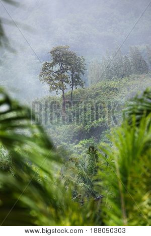 Tropic forest in rain and white mist fog