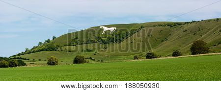 Panorama of Westbury White Horse. Hill figure created by exposing white chalk on the escarpment of Salisbury Plain in Wiltshire UK