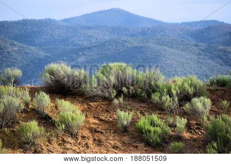 Sagebrush with mountains beyond taken in the rural Great Basin Desert