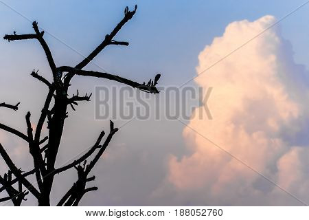 Silhouette tree branch with sky cloudy background
