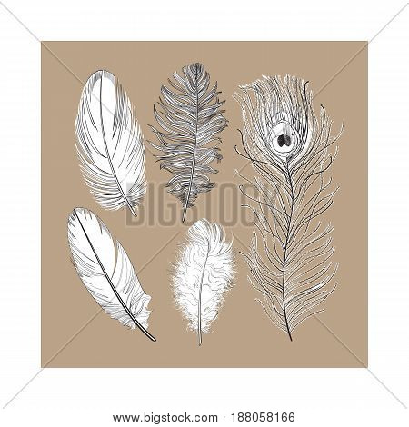 Hand drawn set of various black and white bird feathers, sketch style vector illustration on brown background. Realistic hand drawing of peacock, parrot, dove, falcon bird feather