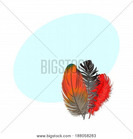 Hand drawn bunch of three colorful tropical, exotic bird feathers, sketch style vector illustration with space for tex. Realistic hand drawing of colorful bird feather