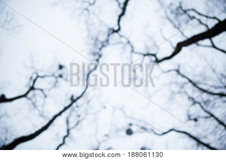 Blurry silhouettes of bare trees with mistletoes against the sky.