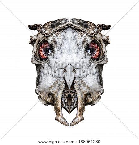 Isolated Creepy Alien Headbones Artwork