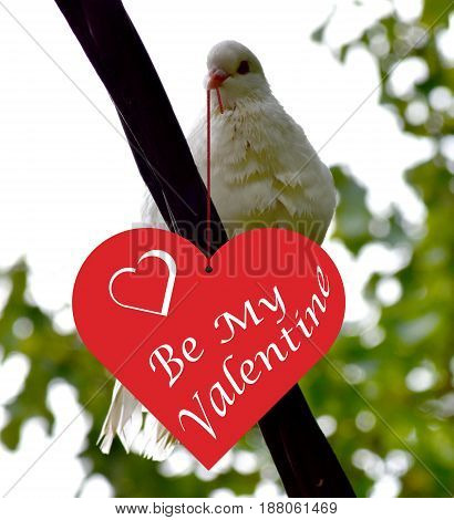 White dove with a heart-shaped message for the Valentine's day in it's beak