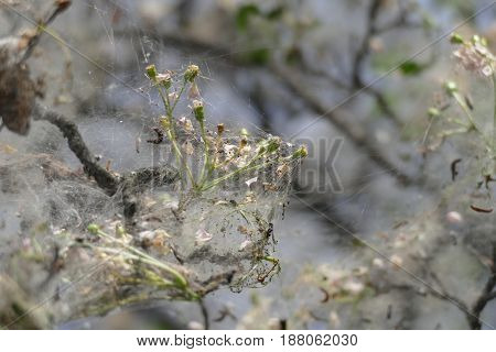 Tree Branch Covered With Spider Web