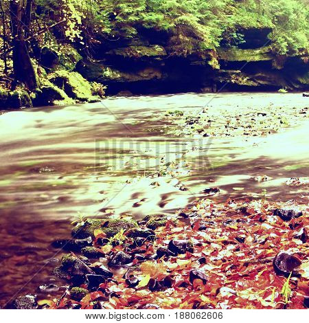 Mountain River With Low Level Of Water, Gravel With Colorful Beech, Aspen And Maple Leaves. Fresh Gr