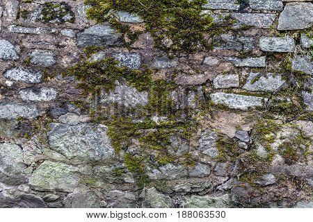 The surface of the old stone English fence. Moss and lichens grew on the rocks. Natural background.