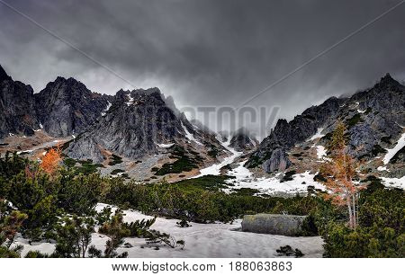 Mountain pine in High Tatras mountains. Slovakia.
