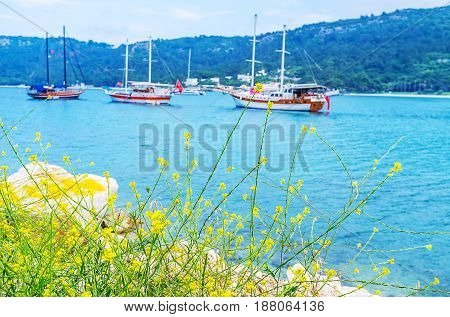 The Flowers On Shore