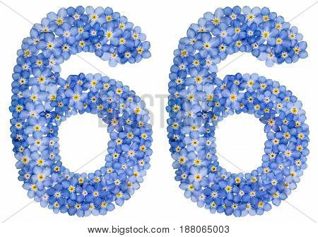 Arabic Numeral 66, Sixty Six, From Blue Forget-me-not Flowers
