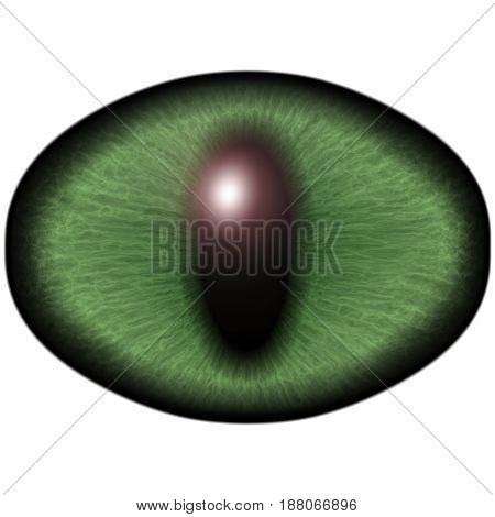 Strange Green Eye Of Feline Animal With Colored Iris. Detail View Into Isolated Predator Eye Bulb