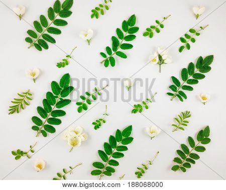 Colorful bright pattern of tree leaves and jasmine flowers on white background. Floral summer ornament Flay lay top view