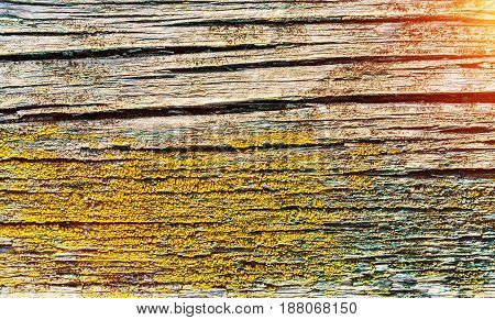 wooden surface. old cracked paint texture closeup