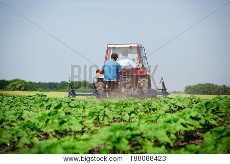Beautiful young green sunflower weed plowing picture