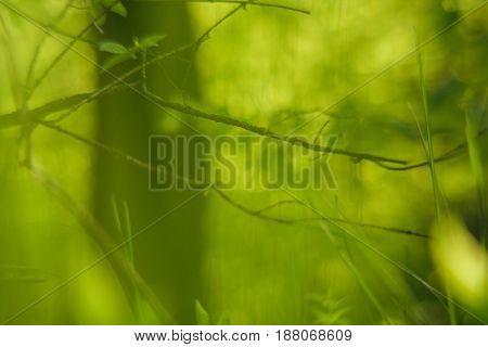 Green branch and leaves over blured abstract background in forest.